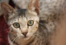 YQGrocks | Moggy Cat Rescue Holding Online Auction in June